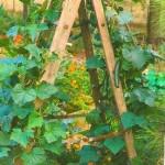 cucumberladder